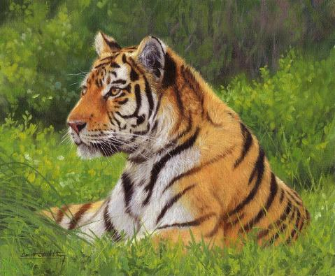 amur-tiger-painting-david-stribbling